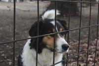 Maak de grond voor de hond met een hek - dus je gaat