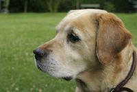 Hoe maak je een hond huidschilfers herkennen?