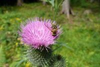 Wespensteek is gezwollen - Eerste hulp voor beten