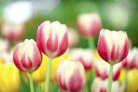 Pasen decoratie voor de tuin - planten suggesties