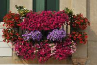 Herfst bloemen voor het balkon - dus je hem prachtig maken