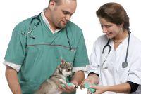 Gescheurde ligamenten bij honden - Nuttig