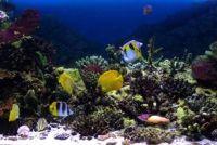 Verwijder algen uit Deko - zo schoon uw aquarium