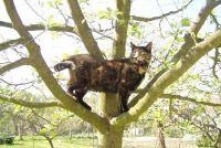 Cats defensieve gordel - en dat is bij de installatie in acht te nemen