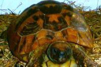 Voor schildpadden bouwen de koude bak zelf - hoe het werkt