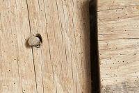 Wat te doen tegen houtworm?