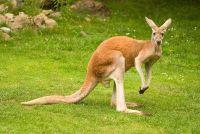 Grappige dingen die je kunt doen in Australië - zodat uw vakantie Down Under een succes wordt