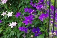 Plantenbak met latwerk - sleutels tot succes planten