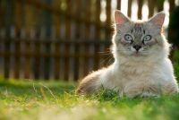 Het bouwen van een kat Freilaufgehege en het opzetten van - dus slaagt's