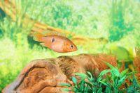 Aquarium in de muur - het resultaat is een scheidingswand