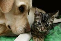 Valse zwangerschap bij honden - dus helpen uw hond