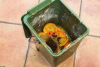 Ongedierte en maden in organisch afval - huis van ongedierte in de keuken