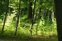 Schilderen met olieverf - dus slagen bomen levensechte