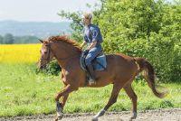 Horse is op weg naar huis sneller - nuttige maatregelen