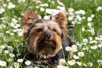 Het planten van planten tegen honden - praktisch advies