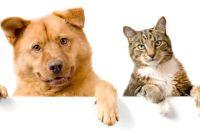 Verwijder kauwgom uit bont van honden en katten