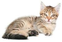 Bij katten scheet - die je kunt doen