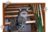 Onderstreep houten trap en afdichting met glanslak - Handyman