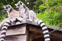 Winter vakantie in het Zuid-uitgaven - tips voor de overwintering in Madagascar