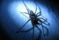 Ontdoen hoek spinnen - hoe het moet