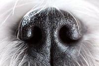 Loopneus - wat te doen met honden?