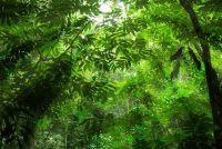Fruit in het regenwoud - wetenswaardigheden