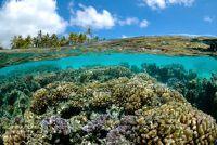 Het belang van het ecosysteem voor de mens