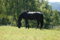Terug spieren op te bouwen van het paard