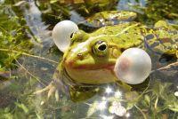 5 waterdieren in de vijver