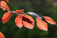 Eenzame boom - Definitie