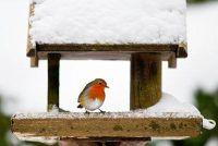 Het maken van vet voedsel voor vogels zelf - hoe het werkt