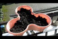 Plantaardige lente-uitjes - hoe het heeft gedaan