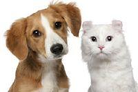 eBay dier markt - Nuttig