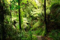 Zijn tropische regenval productiever dan extratropical?  - Zo is het met regen in de tropen
