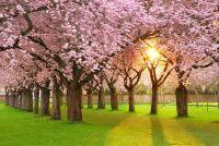 Welke bomen nu bloeien?  - Kennis van inheemse boomsoorten