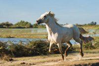 Fabricage insectenwerend middel voor het paard zelf