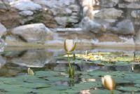 Hout in de tuin - tips en ideeën voor het creëren van een vijver bergkam