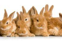 Rabbit baby - verzorging en onderhoud
