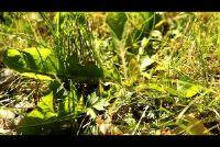 Dandelion gevecht - zodat u het onkruid in de tuin te gaan