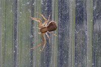 Heb spiders bot?  - Informatie over de dieren