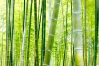 Gebruik bamboe kunstmest goed - hoe het werkt