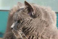 Slag bij katten - tekenen herkennen en snel hulp