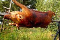 Geslacht varken - hoe het werkt