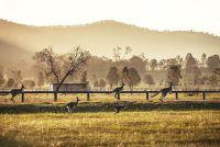 Wat te se zien in Australië?  - Reistips