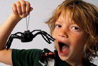 Spiderman - dus het is van een grappige kinderen verjaardagsfeestje in een teken van de spin