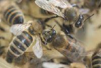 Insecten tijdens stormen - dus profiteren van de dieren als een weer profeet