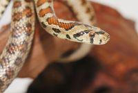 Snakes in Kreta - Nuttige informatie voor reizigers