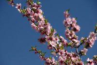 Mallorca maart - deze functies die u verwacht
