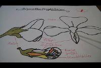 Het identificeren van de vlinder bloei planten - zodat u herkent de bloemen