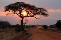 Ontwikkeling Kenia - armoede, honger en projecten